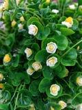 Φωτογραφία εικόνας τεχνητών λουλουδιών στοκ εικόνα
