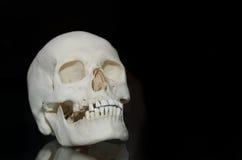 Φωτογραφία ενός ανθρώπινου κρανίου Στοκ Φωτογραφίες
