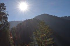 Φωτογραφία ενός δέντρου και ενός φωτός του ήλιου που περνούν μέσω του στοκ εικόνα με δικαίωμα ελεύθερης χρήσης