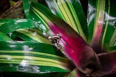 Φωτογραφία ενός δηλητηριώδους βατράχου στοκ φωτογραφία με δικαίωμα ελεύθερης χρήσης