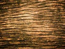 Φωτογραφία ενός της υφής φλοιού ενός δέντρου στοκ φωτογραφία με δικαίωμα ελεύθερης χρήσης