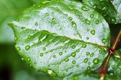 Φωτογραφία ενός φύλλου με τις πτώσεις δροσιάς στοκ φωτογραφίες με δικαίωμα ελεύθερης χρήσης
