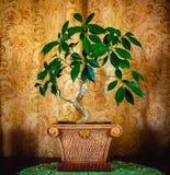 Φωτογραφία ενός όμορφου δέντρου μπονσάι σε ένα καφετί υπόβαθρο Στοκ Εικόνες