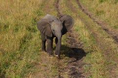 φωτογραφία ελεφάντων μωρών του 2009 που λαμβάνεται Στοκ φωτογραφία με δικαίωμα ελεύθερης χρήσης
