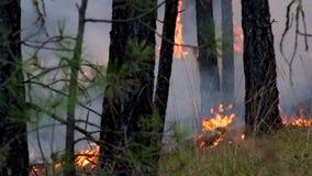 Φωτογραφία διαβίωσης Cinemagraph δασικής πυρκαγιάς απόθεμα βίντεο