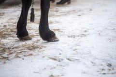 Φωτογραφία κινηματογραφήσεων σε πρώτο πλάνο των ποδιών αλόγων όπως στέκονται στο τραγανό χειμερινό χιόνι στοκ φωτογραφία με δικαίωμα ελεύθερης χρήσης