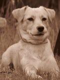 Φωτογραφία κινηματογραφήσεων σε πρώτο πλάνο του χαριτωμένου σκυλιού Στοκ Φωτογραφία