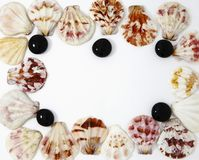 Φωτογραφία κοχυλιών θάλασσας για το μικροϋπολογιστής-απόθεμα στοκ εικόνες
