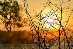 Φωτογραφία με μια θερινή ανατολή και ένα δέντρο Στοκ Φωτογραφίες