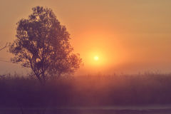 Φωτογραφία με μια θερινή ανατολή και ένα δέντρο Στοκ εικόνα με δικαίωμα ελεύθερης χρήσης
