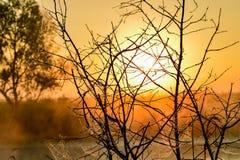 Φωτογραφία με μια θερινή ανατολή και ένα δέντρο Στοκ Φωτογραφία
