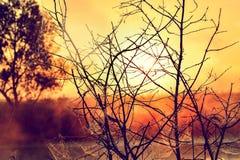 Φωτογραφία με μια θερινή ανατολή και ένα δέντρο Στοκ Εικόνα