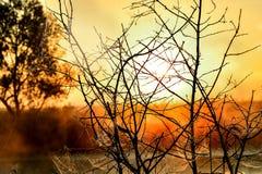 Φωτογραφία με μια θερινή ανατολή και ένα δέντρο Στοκ Εικόνες