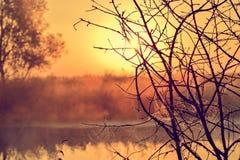 Φωτογραφία με μια θερινή ανατολή και ένα δέντρο Στοκ φωτογραφία με δικαίωμα ελεύθερης χρήσης