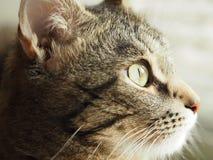 Φωτογραφία μιας γάτας στο σχεδιάγραμμα Στοκ Φωτογραφία