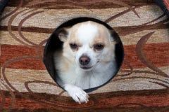 Φωτογραφία να λείψει του κουταβιού στο σκυλόσπιτο Στοκ εικόνα με δικαίωμα ελεύθερης χρήσης