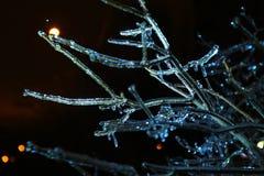 Φωτογραφία νύχτας των μπλε παγωμένων icycle κλάδων Στοκ Εικόνες