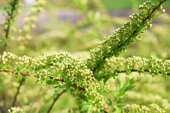 Φωτογραφία λουλουδιών άνοιξη Στοκ φωτογραφία με δικαίωμα ελεύθερης χρήσης