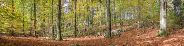 Φωτογραφία πανοράματος του δάσους στις σκιές φθινοπώρου στο Eifel, Γερμανία στοκ φωτογραφία με δικαίωμα ελεύθερης χρήσης