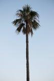 Φωτογραφία που λαμβάνεται στο μεσογειακό νησί Κορσική Στοκ Φωτογραφίες