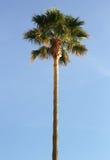 Φωτογραφία που λαμβάνεται στο μεσογειακό νησί Κορσική στοκ εικόνες με δικαίωμα ελεύθερης χρήσης