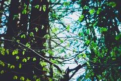 Φωτογραφία που απεικονίζει μια μακρο άποψη άνοιξη του δέντρου καρυδιών brunch με Στοκ φωτογραφία με δικαίωμα ελεύθερης χρήσης
