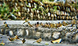 Φωτογραφία πουλιών Στοκ φωτογραφίες με δικαίωμα ελεύθερης χρήσης