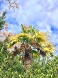 Φωτογραφία που λαμβάνεται στο μεσογειακό νησί Κορσική στοκ φωτογραφία