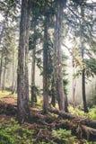 Φωτογραφία πρωινού ενός πράσινου δάσους στα βουνά Στοκ Εικόνες