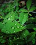 Φωτογραφία σταγόνων βροχής Στοκ Εικόνες