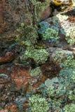 Φωτογραφία της ανάπτυξης βρύου και λειχήνων στην πέτρα στο βουνό Στοκ φωτογραφία με δικαίωμα ελεύθερης χρήσης