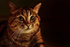 Φωτογραφία της γάτας Στοκ εικόνες με δικαίωμα ελεύθερης χρήσης