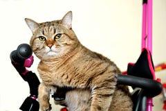 Φωτογραφία της γάτας Στοκ φωτογραφία με δικαίωμα ελεύθερης χρήσης