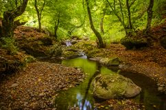 Φωτογραφία τοπίων φθινοπώρου/μικρός κολπίσκος που διατρέχει μιας κοιλάδας στο δάσος Στοκ Φωτογραφία