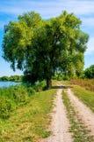 Φωτογραφία του δέντρου ιτιών κοντά στην όμορφη μπλε λίμνη με το δρόμο Στοκ Φωτογραφία