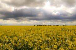 Φωτογραφία του κίτρινου τομέα με τα όμορφα λουλούδια στοκ εικόνες