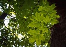 Φωτογραφία του κλάδου σε ένα πράσινο δάσος Στοκ Εικόνες