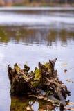 Φωτογραφία του ξύλινου κολοβώματος στη λίμνη στο πορτοκαλί δάσος φθινοπώρου Στοκ Φωτογραφίες
