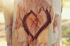 Φωτογραφία του παλαιού κορμού δέντρων με την καρδιά που χαράζεται σε το Valentine& x27 έννοια ημέρας του s ρομαντική ανασκόπηση Στοκ φωτογραφία με δικαίωμα ελεύθερης χρήσης