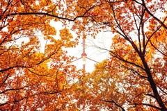 Φωτογραφία του πορτοκαλιού δάσους φθινοπώρου με τα φύλλα και τον πύργο TV Στοκ Φωτογραφία
