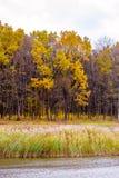 Φωτογραφία του πορτοκαλιού δάσους φθινοπώρου με τα φύλλα κοντά στη λίμνη Στοκ φωτογραφία με δικαίωμα ελεύθερης χρήσης