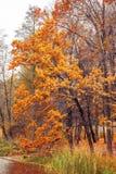Φωτογραφία του πορτοκαλιού δάσους φθινοπώρου με τα φύλλα κοντά στη λίμνη Στοκ φωτογραφίες με δικαίωμα ελεύθερης χρήσης