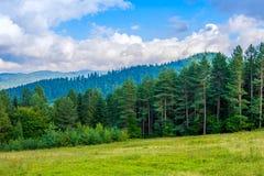 Φωτογραφία του πράσινων δάσους και της κοιλάδας στα Καρπάθια βουνά Στοκ φωτογραφίες με δικαίωμα ελεύθερης χρήσης