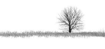 Φωτογραφία του χειμερινού δέντρου με τον τομέα που καλύπτεται από το χιόνι Στοκ Φωτογραφίες