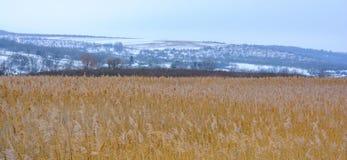 Φωτογραφία του χειμερινού καλάμου με τον ομιχλώδη ορίζοντα Στοκ φωτογραφία με δικαίωμα ελεύθερης χρήσης