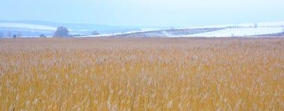 Φωτογραφία του χειμερινού καλάμου με τον ομιχλώδη ορίζοντα Στοκ Εικόνα