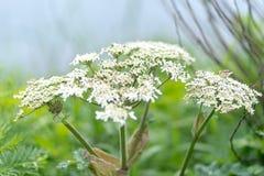 Φωτογραφία των άσπρων λουλουδιών στο κλίμα χλόης στοκ εικόνες