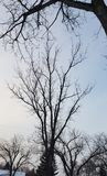 φωτογραφία των δέντρων το χειμώνα κατά τη διάρκεια ενός βαθιού - πάγωμα στοκ φωτογραφία με δικαίωμα ελεύθερης χρήσης