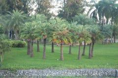 Φωτογραφία των δέντρων Plam - τροπικό τοπίο στην Ταϊλάνδη στοκ φωτογραφία