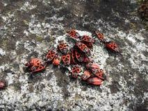 Φωτογραφία των ζωύφιων πυρκαγιάς Στοκ φωτογραφίες με δικαίωμα ελεύθερης χρήσης